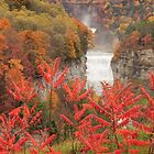 Falls Through the Sumac by Lisa Cook