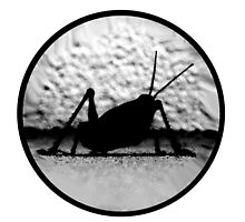 COOL GRASSHOPPER B+W ver.1 by SukiWukiDookie