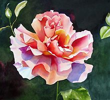 """""""Just Joey"""" Rose Watercolor by Pat Yager"""