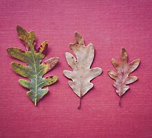 Three Leaves by Bethany Helzer