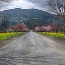 Napa Vineyard Road by Diego  Re
