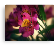 Alstroemeria - Little Lily Canvas Print