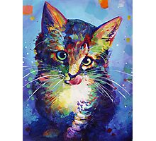 Marcy the Kitty Photographic Print