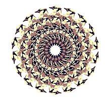 Circle of Life by xeraa