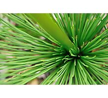 porcupine in green Photographic Print