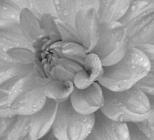 Droplets by EvaLivyStudios