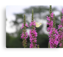 The Bee and the Butterfly Canvas Print