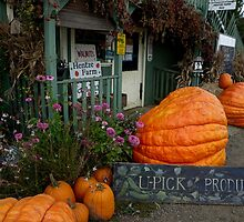 You Have a Big Pumpkin by Charles & Patricia   Harkins ~ Picture Oregon