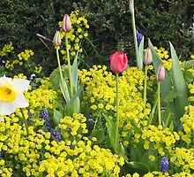 Spring Selection by missmoneypenny