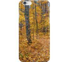 Golden Fall Colours iPhone Case/Skin