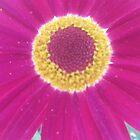 Purple Flower by MIchelle Thompson