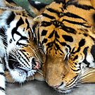 Cuddly Tigers by John Bullen