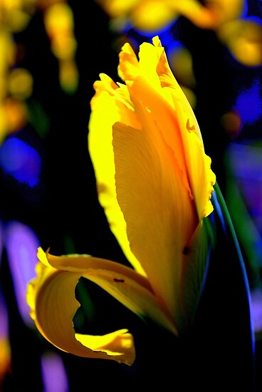 Sunlit Passion By Lorraine McCarthy by Lozzar Flowers & Art