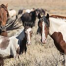 Pintos in Sagebrush by Kelly Jay