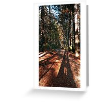 Indian summer forest trail | landscape photography Greeting Card