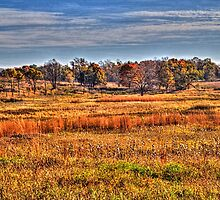 Prairie Late Fall I by Roger Passman