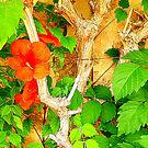 Hibiscus On Withered Wood by Fara