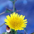 ©NS Tiny Yellow Flower IIA. by OmarHernandez