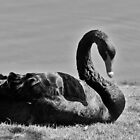 Black Swan by Donuts