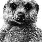 Meerkat Birthday Card by Lorna Mulligan