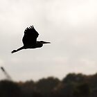 Grey Heron Silhouette by Ashley Beolens
