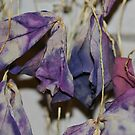 All dried leaves by ANNABEL   S. ALENTON
