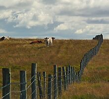 Fenced In by Kat Simmons