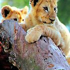 Lion Cubs at Play by Carole-Anne