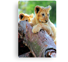 Lion Cubs at Play Canvas Print