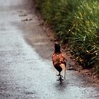 Pheasant on road Capel y Ffin Wales 198405170100 by Fred Mitchell