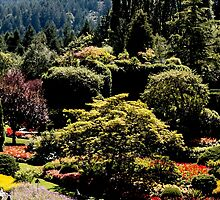Butchart Gardens by Marylou Badeaux