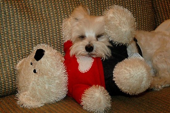love me, love my teddy by Margaret  Shark
