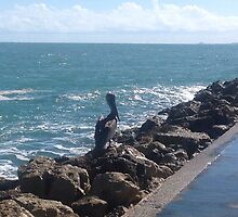 Pelican on the Jetty by DebAnn57