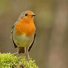 Robin - III (Erithacus rubecula) by Peter Wiggerman