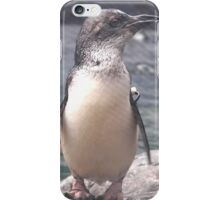 Little Blue Penguin Christchurch New Zealand iPhone Case/Skin