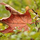 Autumn leaf...time to say good-bye #2 by Poete100