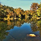 Autumn River Reflection by Rick  Friedle
