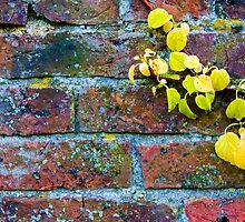 Autumn leaves against red brick wall, natural frame background by Stanciuc