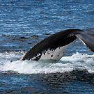 Whale Tail by DaveBassett