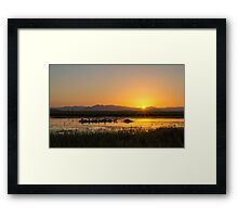 Pelicans By Sunset Framed Print