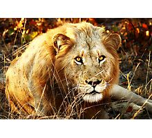 Kruger National Park, South Africa. 2009 II Photographic Print