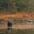 Moose on Wolf Howl Pond by Jim Cumming