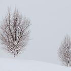 Bare Winter Tree by Kate Purdy