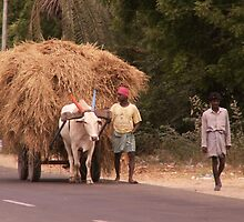 Carting Fodder, Gingee, Tamil Nadu, India by indiafrank