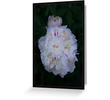 White Peony And Companion Abstract Flower Painting Greeting Card