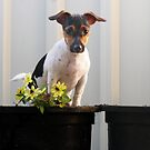 Potted Millie by Sharon Brown