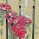 Fading Roses by Fara