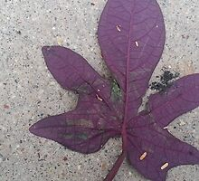 Pretty Purple Potato Vine by AshleyPaynter