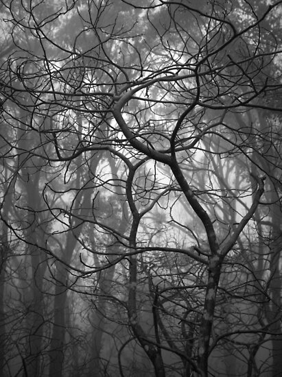 Scary Trees- Pimpala Track by Ben Loveday