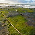 Green algae sandstone. Caloundra. by Ian Hallmond